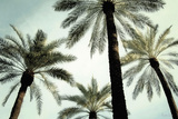 Palm Two