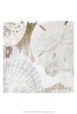 White Shells I