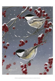 Winter Chickadees II