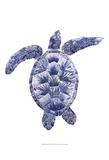 Marine Turtle II