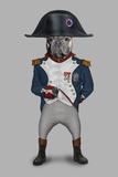 Napoleon (Pets Rock)