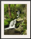 Scenic View of a Smoky Mountains Waterfall and Forest
