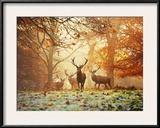 Four Red Deer  Cervus Elaphus  in the Forest in Autumn