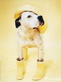 Zen Gumbootdog