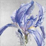 Iris in Argent