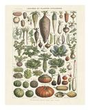 Legumes I