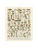 Champignons I Reproduction d'art par Adolphe Millot