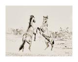 Dueling Horses Pencil
