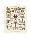 Crustaces Reproduction d'art par Adolphe Millot