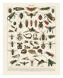 Insectes I