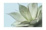 Soft Focus Succulent 4