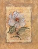 Grandi Flora