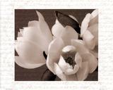 Winter Magnolia I