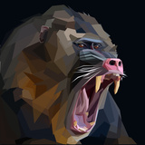 Angry Ape Monkey Mandrill Baboon Screaming in Rage on Dark Background