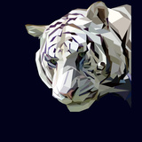 Mighty Head of Majestic White Tiger on Dark Background