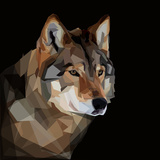 Dangerous Head of Timber Wolf on Dark Background