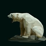 White Polar Bear Sit on Rock and Roars