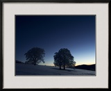 Silhouetted European Beech Trees and Snow at Dawn