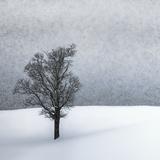 Lonely Tree Idyllic Winterlandscape Reproduction d'art par Melanie Viola