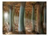 Odd Forest