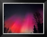 Curtains of Northern Lights above Fairbanks  Alaska  USA