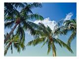 Palmiers Reproduction d'art par Melanie Viola