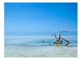 Florida Lonely Root Reproduction d'art par Melanie Viola