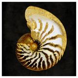 Golden Ocean Gems II