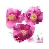 Pink Bloom II