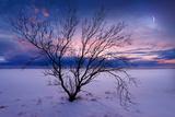 Cold Moon Papier Photo par Philippe Sainte-Laudy