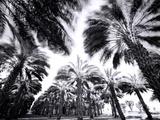 Spinning Palms