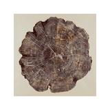 Timber I