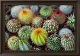 Close-Up of Multi-Colored Cacti