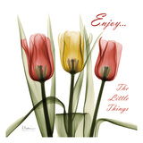 Tulips Enjoy The Little Things