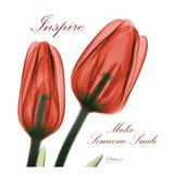 Inspire Tulips