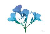 Oleander Turq Indigo
