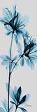 Blue Azalea