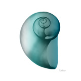 Teal Water Snail 2