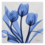 Midnight tulips 2