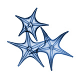 Blue Three Starfish
