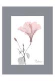 Hibiscus B49 Pink Matte