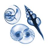 Blue Shells Two