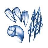 Blue Shells Five