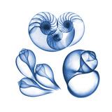 Blue Shells Six
