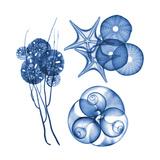 Blue Shells Four