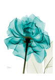 Teal Spirit Rose