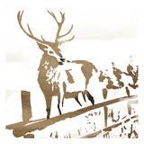 Deer Gaze