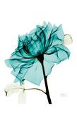 Teal Spirit Rose 2