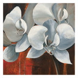 Pearl Orchid I
