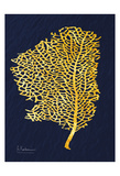 Golden Sea Fan